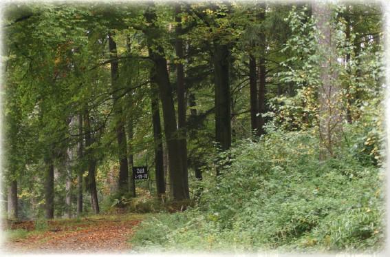 MUNA-Wald - Flyer - Foto