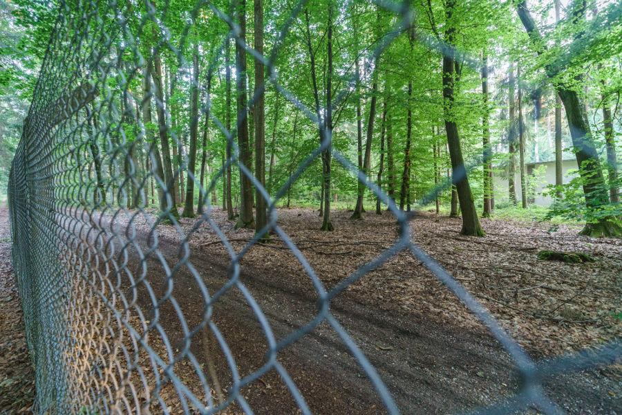 Blick über den Zaun der Muna - Schierling 2020